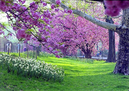 Spring in Central Park by Alberto  DeJesus