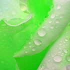 Lime rose in the rain by Courtneystarr