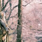 Central Park Squirrel by simtmb