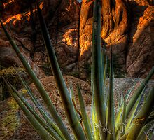 Spiked View by Bob Larson