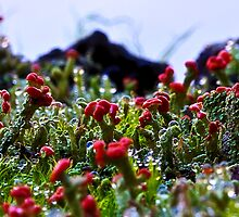 Alien Life on Earth - Lichen & Moss by Normf