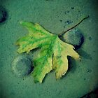 Autumn leaf by Jason Feather