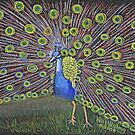 Peacock in pencil by Woodie
