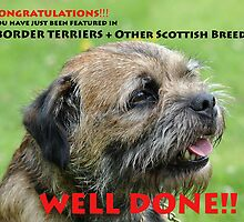 Feature Banner for Border Terriers + Other Scottish Breeds by Dorothy Thomson