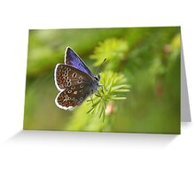 Common Blue - Polyommatus icarus Greeting Card