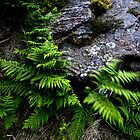 Rock and Ferns by PaulBradley