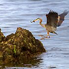 GRACEFUL LANDING by Sandy Stewart