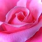 Pink Rose by Lady  Dezine