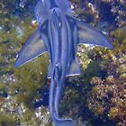 Shark Slumber - Crystal Palace, Rottnest by JVGMcGhie
