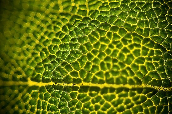 Green Leaf by Matthew Osier