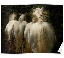 The White Horses of Absaroka Poster