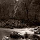 Howqua River - Victoria by ShaneBooth