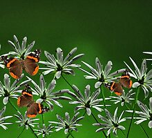 Butterflys among the flowers by Matthew Laming