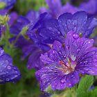 Sparkling blue by Agnes McGuinness