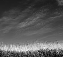 Nature in black and white III by Anne Staub