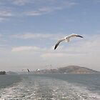 Sea Birds Alcatraz San Francisco USA by mikequigley