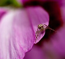 Miniscule by Barb Leopold
