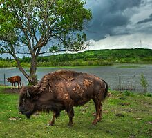 On The Plains by Sandra Parlow