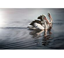 """""""In Respect of the Pelican"""" Photographic Print"""