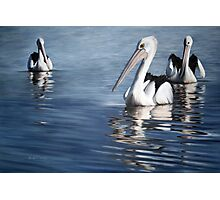 """""""In Respect of the Pelican II"""" Photographic Print"""