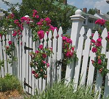White Picket Fence by Betty Mackey