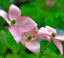 Dogwood Blossom Triplets by Judy Grant