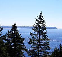 Lighthouse Park by Alyce Taylor