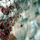 Wall with Leaves by Katie Paul