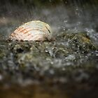 Sea Shell In The Rain by Wolf Kettler