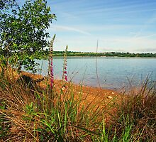 Carsington Waters, Derbyshire by trish725
