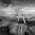 Three by AnastasiART