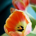 Tulips by Cathie Tranent