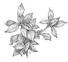 Leaves by Natalie Berman
