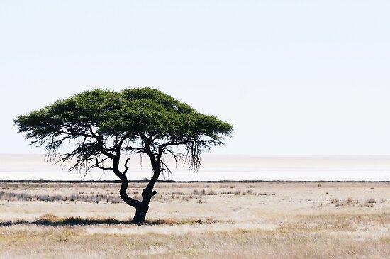 Deserted Tree by Matthew Pugh