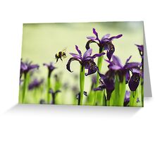 Iris Bee Greeting Card
