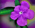 Painted Flower by Margaret Stevens