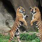 Brothers Take a Stand - Cincinnati Zoo by Kathy Newton
