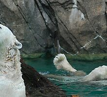 Day at the Pool  - Cincinnati Zoo by Kathy Newton