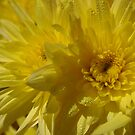 Yellow by abbycat