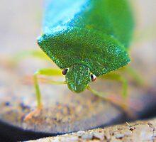 Stink Bug by missmoneypenny