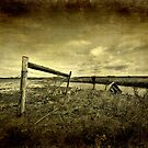 Barbed Wire Fence by Myron Watamaniuk