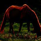 Dreamy Horses by Mustafa UZEL