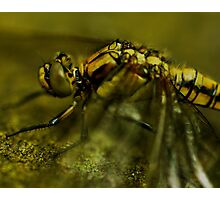 Four-Spotted Chaser Closeup Photographic Print
