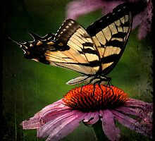 TTV-Water Color Beautiful Butterfly. by mikepemberton