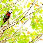 So? a bird's gotta eat! by nadine henley