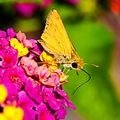 Skipper Butterfly Resting On Small Flowers by georgiaart1974