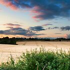 Cotswold Summer Evening by RodneyCleasby