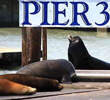 Pier 39 by Jem Wright