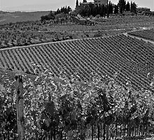 Tuscan Vineyards by Neil Clarke