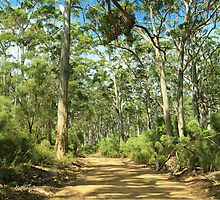 Boranup Forest #3, Margaret River, Western Australia by Elaine Teague